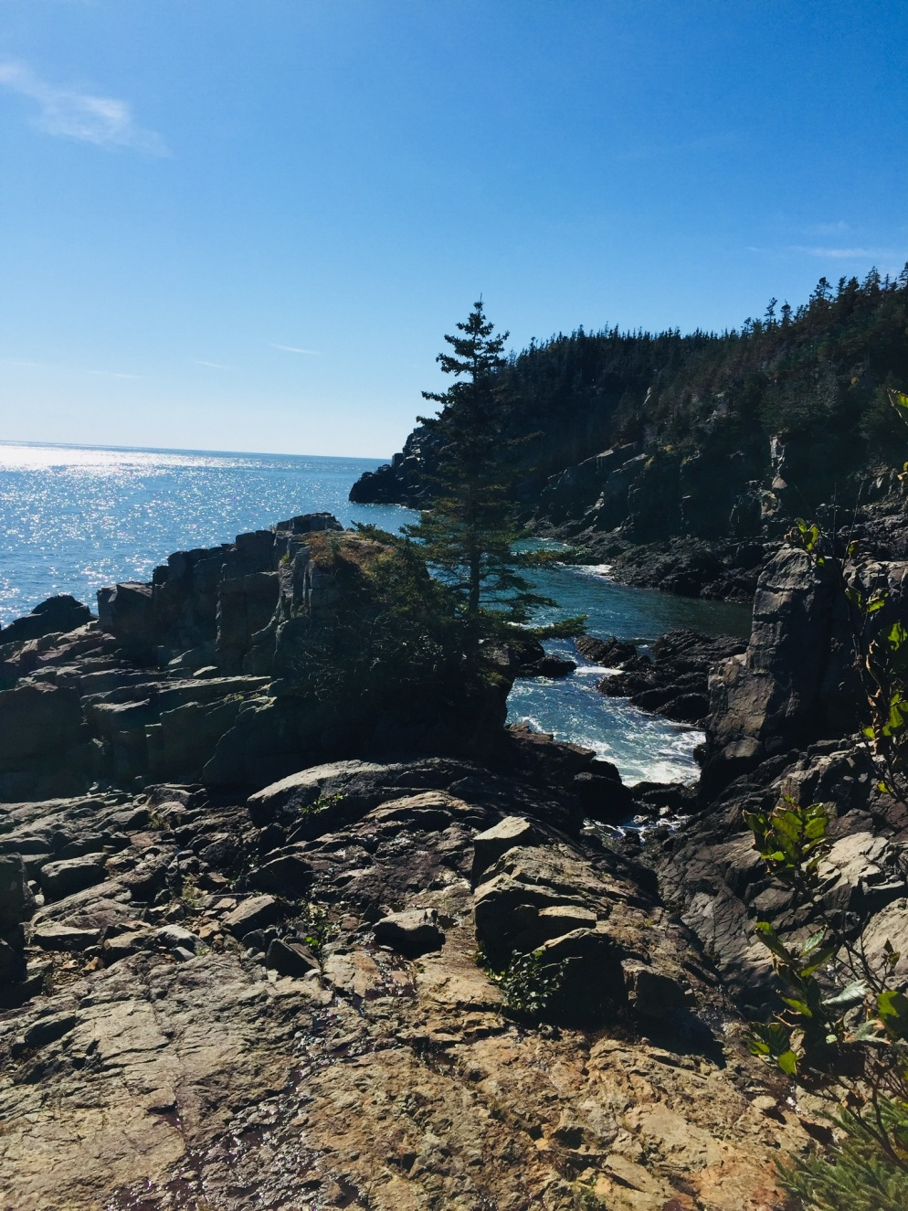 Coastal Trail at Quoddy Head State Park, Lubec, ME