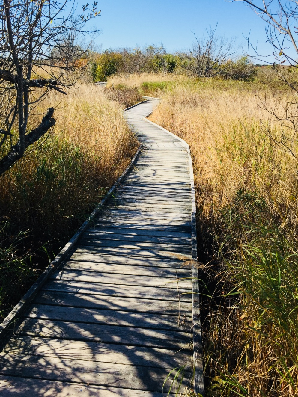 Boardwalk on Mowry Beach Trail