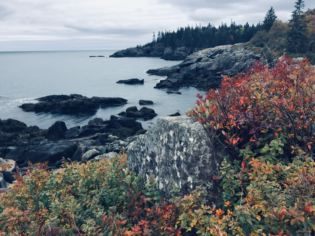 Fall foliage on Coastal Trail near Black Point