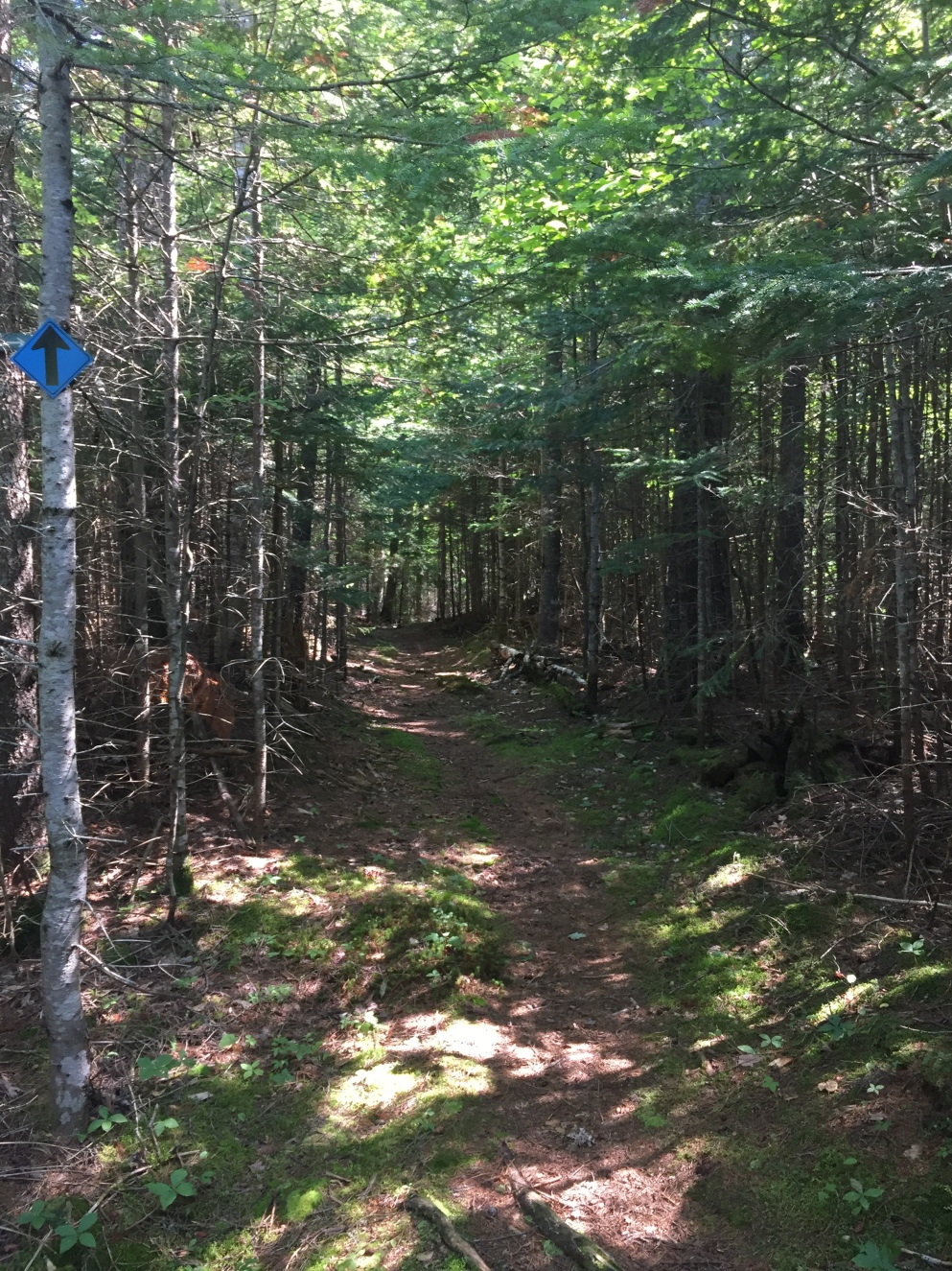 Pond Loop Trail, marked with blue signs
