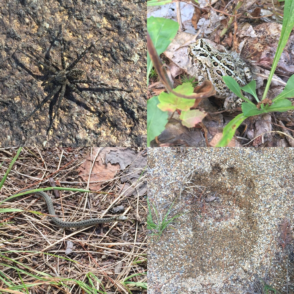 Wildlife on Orin Falls Trail, Katahdin Woods and Waters