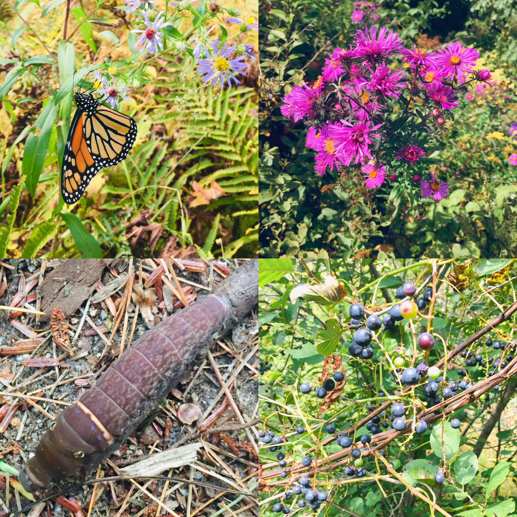 Flora and fauna, Mill Brook Preserve, Westbrook, ME