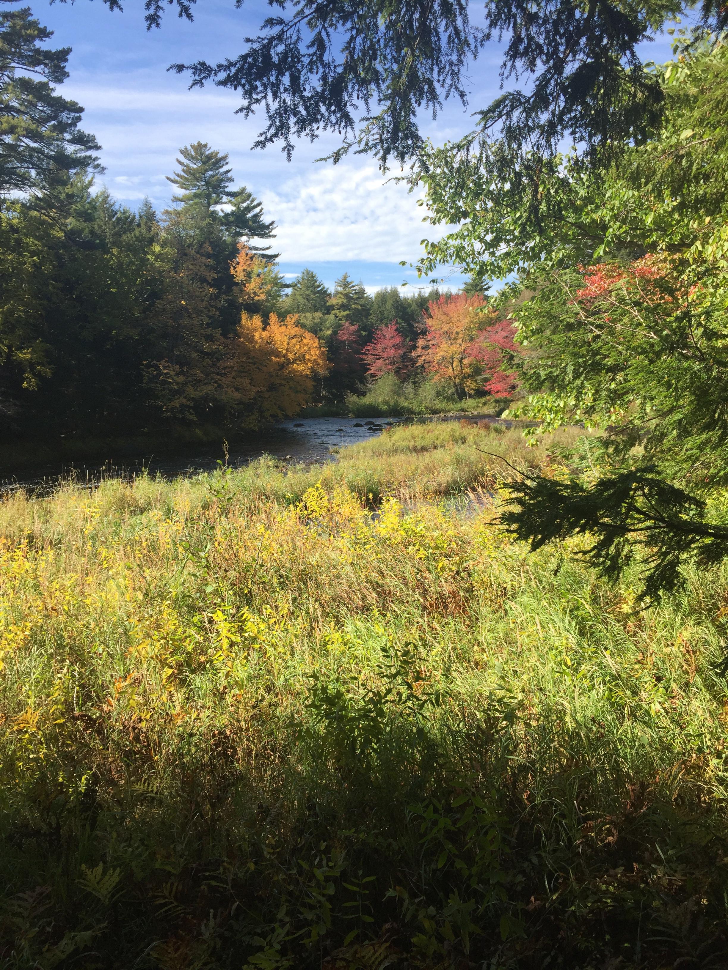 Fall colors, Mariaville Falls Preserve, ME