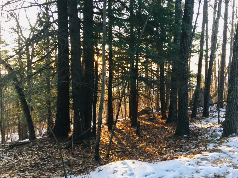 Forest on Hawk Mountain, Waterford, ME