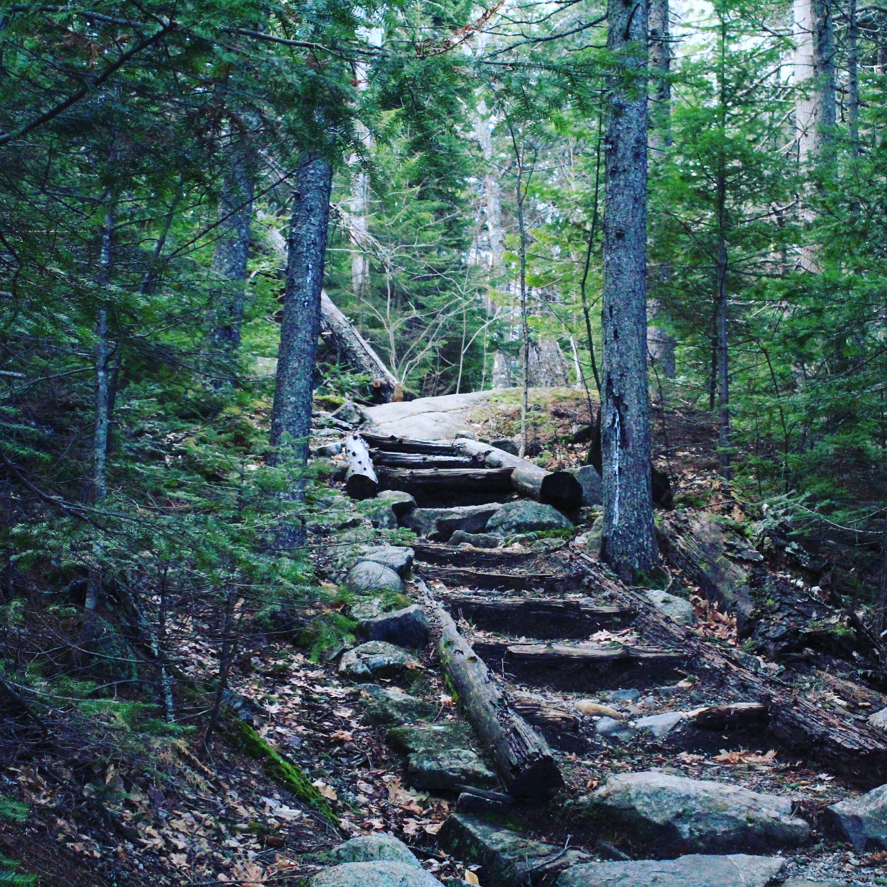 Center Hill Nature Trail, Mount Blue State Park, Weld, Maine